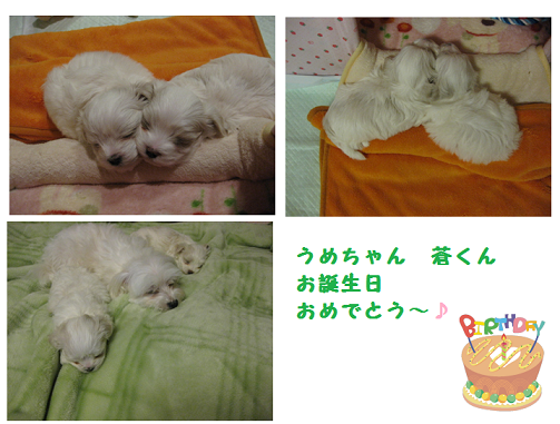 20120222.png
